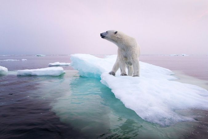 polar-bear-climate-change-story-1200_78250_990x742